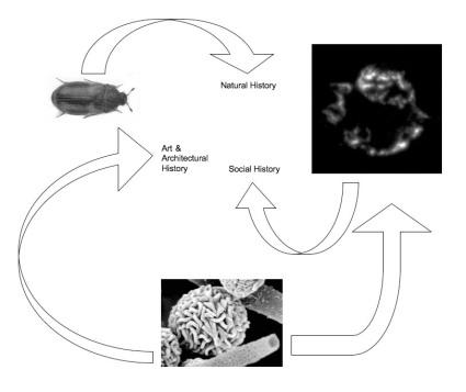ecohistory diagram